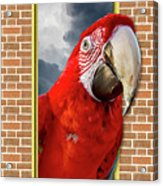 Happy Red Parrot Acrylic Print