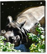 Happy Rhino Acrylic Print