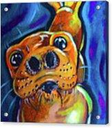 Happy Seal Acrylic Print