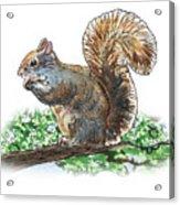 Happy Squirrel  Acrylic Print