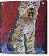 Happy The English Sheepdog Acrylic Print