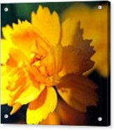 Happy Yellow Flower Acrylic Print