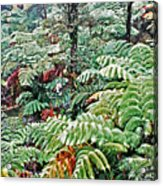Hapu'u Fern Rainforest Acrylic Print