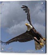 Hard Banking Eagle Acrylic Print