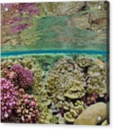 Hard Coral Carpets A Shallow Seafloor Acrylic Print by Brian J. Skerry