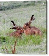 Hare 2 Day Acrylic Print