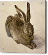 Hare Acrylic Print by Albrecht Durer