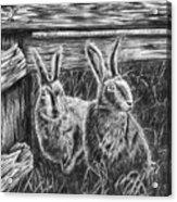 Hare Line  Acrylic Print