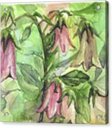 Harebell Acrylic Print