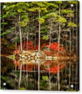 Harold Parker State Park In The Fall Acrylic Print