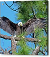 Harriet As I Open Wings Magics Happen Acrylic Print