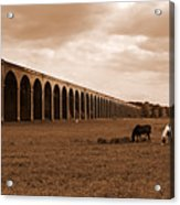 Harringworth Viaduct And Horses Grazing Acrylic Print