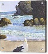 Harris Beach Acrylic Print