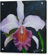 Hartford Orchid Acrylic Print