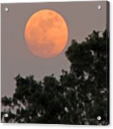 Harvest Moonrise Acrylic Print