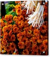 Harvest Mums Acrylic Print