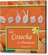 Harvest Spanish Acrylic Print