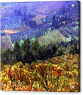Harvest Time At The Vineyard Acrylic Print