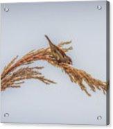 Harvest Time IIi Acrylic Print