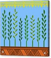 Harvest Acrylic Print