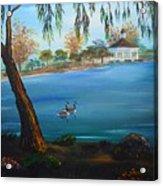 Harveston Lake Geese Acrylic Print