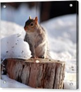 Has Anyone Seen My Nuts Acrylic Print