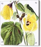 Hau Flower Art Acrylic Print