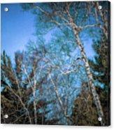 Haunted Trees Acrylic Print