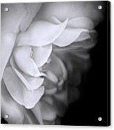 Haunting Beauty Monochrome Rose Acrylic Print