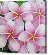 Hawaii An Tropical Plumeria Flower #338 Acrylic Print