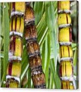 Hawaii Flora 2 Acrylic Print