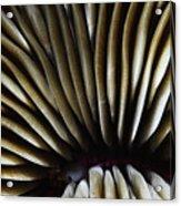 Hawaii Mushroom Coral Acrylic Print
