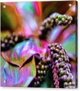 Hawaii Plants And Flowers - Tropics Acrylic Print