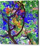 Hawaii Shower Tree Flowers In Abstract Acrylic Print