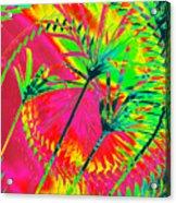 Hawaii Three O Acrylic Print