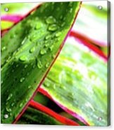 Hawaii Ti Leaves Morning Shower 559 Acrylic Print