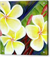 Hawaii Tropical Plumeria Flower #298, Acrylic Print