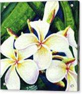 Hawaii Tropical Plumeria Flowers #160 Acrylic Print