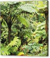 Hawaii Tropical Rainfores Acrylic Print
