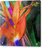 Hawaiian Abstract Acrylic Print