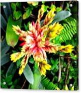Hawaiian Beauty 3 Acrylic Print