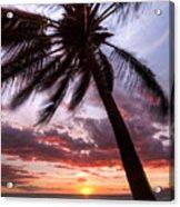 Hawaiian Coconut Palm Sunset Acrylic Print by Dustin K Ryan