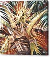 Hawaiian Fireworks Acrylic Print