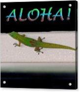 Hawaiian Gecko Acrylic Print
