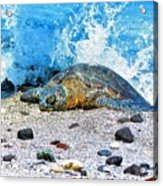 Hawaiian Green Turtle Honu Acrylic Print