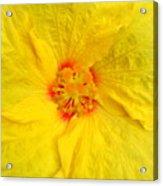 Hawaiian Hibiscus Acrylic Print