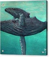 Hawaiian Humpback Whales #455 Acrylic Print