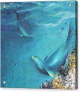 Hawaiian Monk Seals Acrylic Print