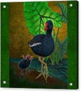 Hawaiian Moorhen Or Gallinule Acrylic Print