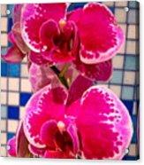 Hawaiian Orchid 1 Acrylic Print